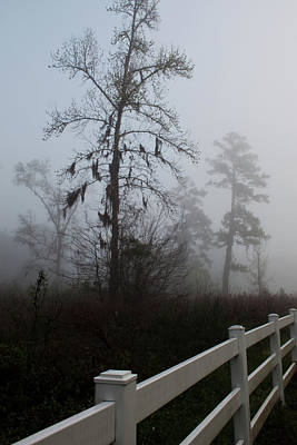 Photograph - Early Morning Fog by Sandi Blood