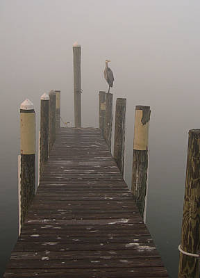 Photograph - Early Morning On The Dock by Dorothy Cunningham