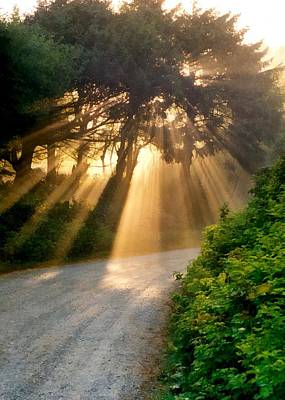 Photograph - Early Morning Sunlight by Michelle Calkins