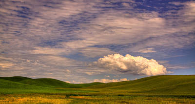 Beach House Signs - Early Summer Wheat in the Palouse by David Patterson