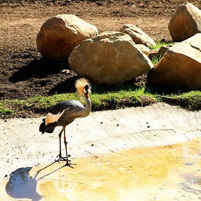 East African Crowned Crane Art Print