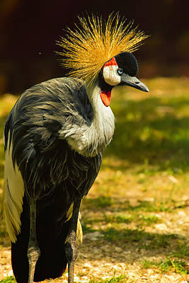 Crane Digital Art - East African Crowned Crane Pose by Bill Tiepelman