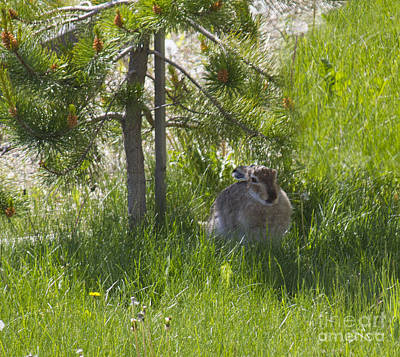 Photograph - Easter Rabbit by Donna L Munro