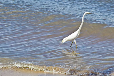 Photograph - Eastern Great Egret by Harry Strharsky