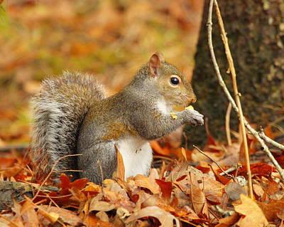 Eastern Grey Squirrel Art Print by Andrew McInnes