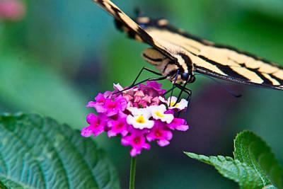 Basketball Patents - Eastern Tiger Swallowtail 8 by Douglas Barnett