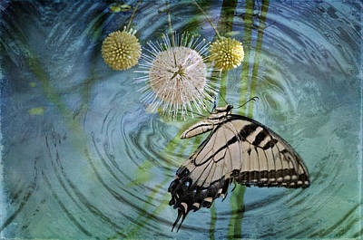 Eastern Tiger Swallowtail On Buttonball Bush Original by Bonnie Barry