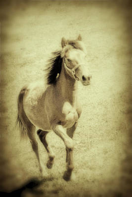 Horsey Photograph - Easy Spirit by Karol Livote