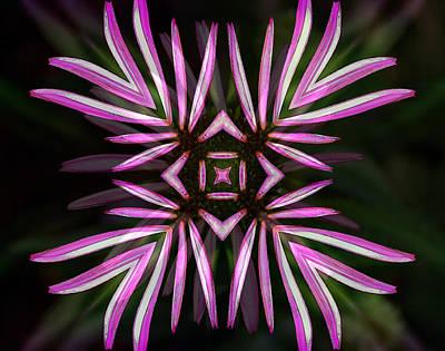Photograph - Echinacea - Abstract by Ellen Heaverlo