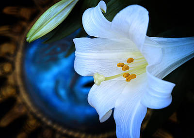 Art Print featuring the photograph Eclipse With A Lily by Steven Sparks