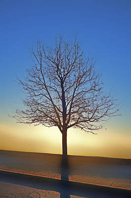 Photograph - Eden Tree by Rick Hartigan