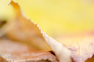 Photograph - Edge Of Autumn by Margaret Pitcher