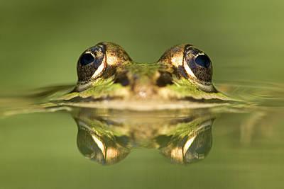 Photograph - Edible Frog Rana Esculenta by Ingo Arndt