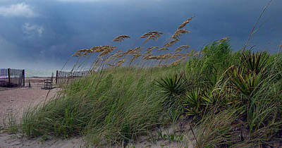 Edisto Island Photograph - Edisto Oat Fields by Skip Willits