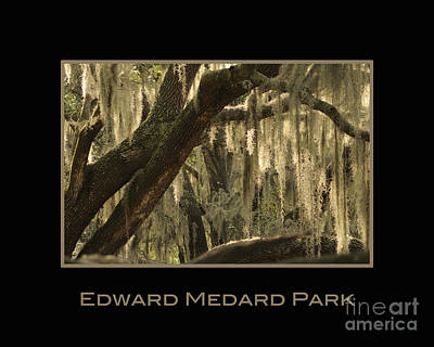 Photograph - Edward Medard Park by Nancy Greenland