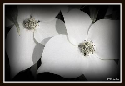 Photograph - Efflorescence by Priscilla Richardson