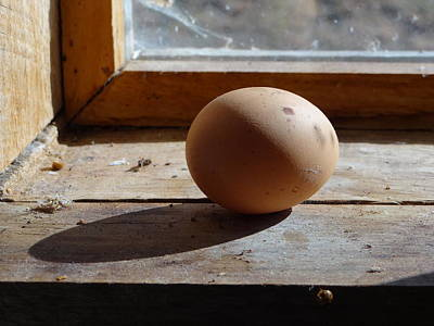 Art Print featuring the painting Egg On A Window Ledge by Carol Berning