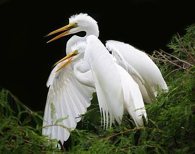 Egret Babies In The Nest Art Print by Paulette Thomas