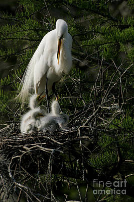 Art Print featuring the photograph Egret Bird - Mother Egret And Babies by Luana K Perez