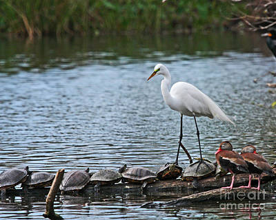 Egret Bird - Supporting Friends Art Print