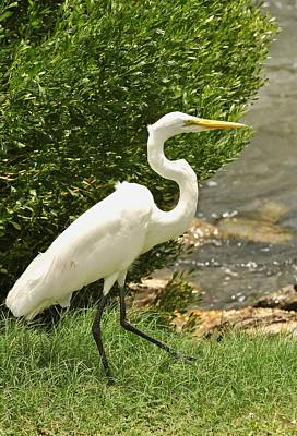 Art Print featuring the photograph Egret By The Bay by Rick Frost