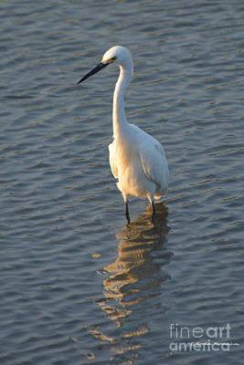 Egret In Marsh Art Print