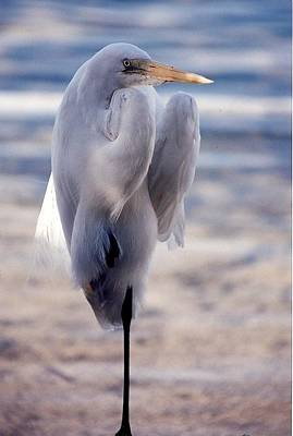 Egret Key West Art Print