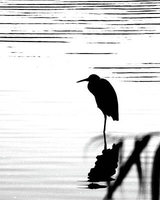 Photograph - Egret  by Lizi Beard-Ward