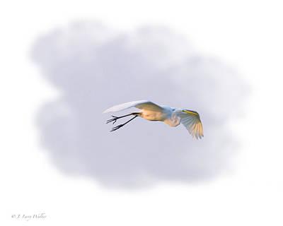Digital Art - Egret Morning Fly by J Larry Walker