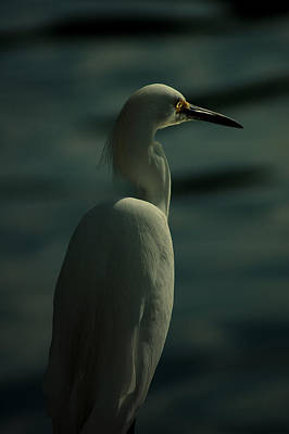 Photograph - Egret Of Matlacha  by David Weeks