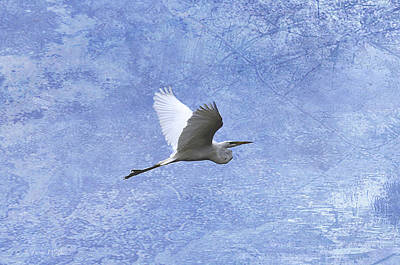 Digital Art - Egret Passing By by J Larry Walker