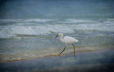 Egret Art Print by Sandy Keeton