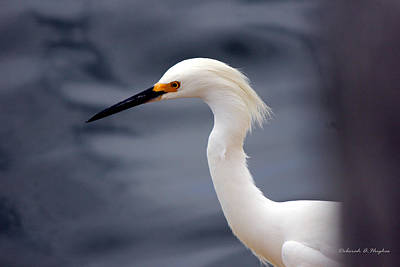 Photograph - Egret Soft by Deborah Hughes