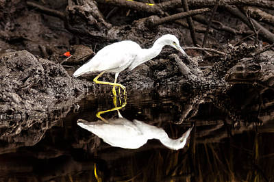 Photograph - Egret Stalking by Scott Hansen