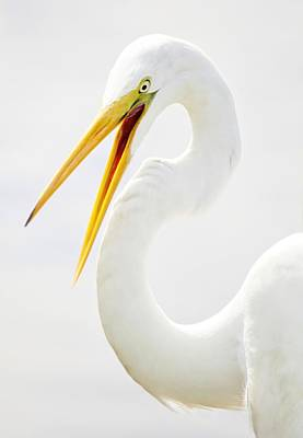 Egret Up Close Art Print by Paulette Thomas