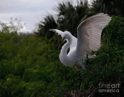 Egret Wings Art Print by Art Whitton