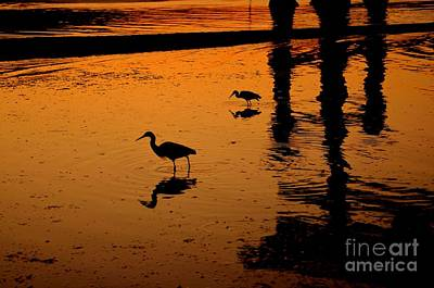 Photograph - Egrets At Dusk by Dean Harte