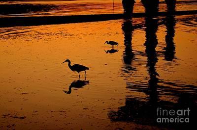 Floating Torii Photograph - Egrets At Dusk by Dean Harte