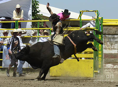Bull Riding Photograph - Rodeo Eight Seconds by Bob Christopher