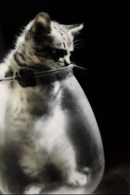 Art Print featuring the photograph El Kitty by Jessica Shelton