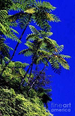 El Yunque Tree Ferns Art Print by Thomas R Fletcher