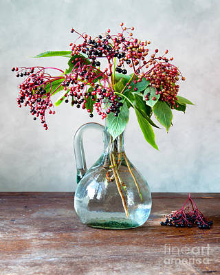 Shiny Photograph - Elderberries 06 by Nailia Schwarz