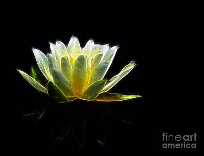 Photograph - Electric Lily by Whispering Feather Gallery