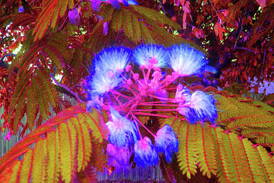 Photograph - Electric Mimosa by Juliana  Blessington