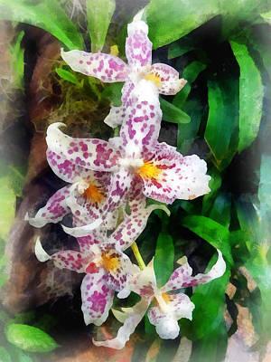 Beallara Photograph - Elegant Beallara Orchid by Susan Savad