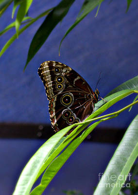 Flutter Photograph - Elegant Butterfly by Nicole Tru Photography