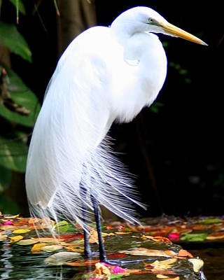 Elegant Egret At Water's Edge Art Print