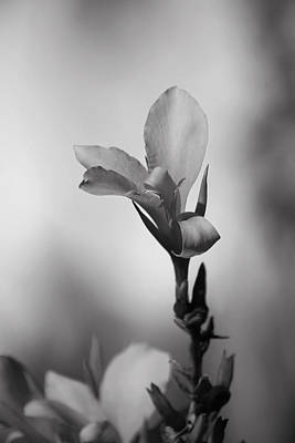 Floral Photograph - Elegantly by Laurie Search