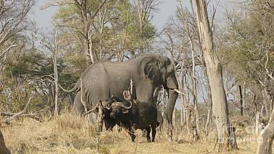 Photograph - Elephant And Buffalos by Mareko Marciniak