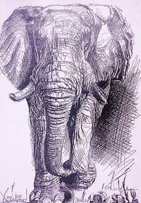 Appreciate Drawing - Elephant Arriving by Cecilia Putter